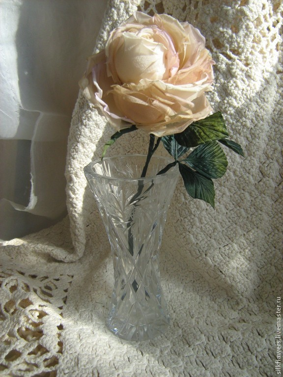 Утренняя роза, Растения, Пермь,  Фото №1