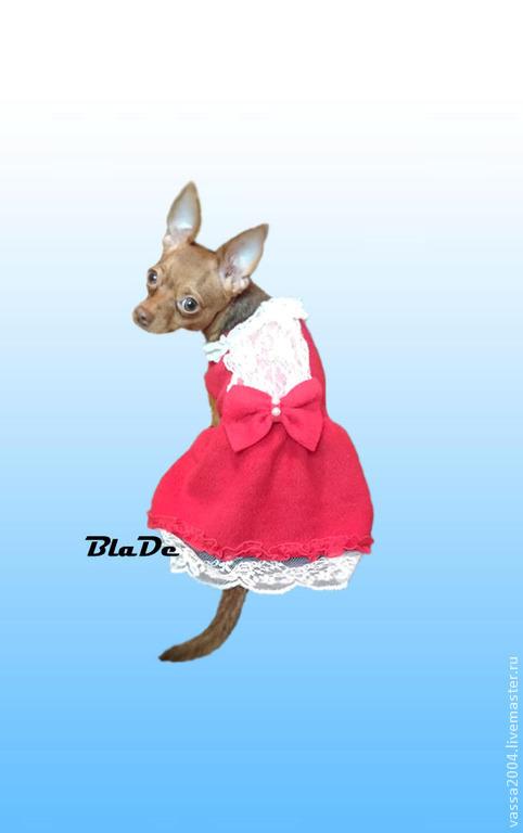 """Одежда для собак, ручной работы. Ярмарка Мастеров - ручная работа. Купить Платье- пальто """"Ягодка """". Handmade. Ярко-красный"""