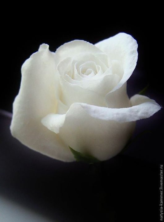 """Заколки ручной работы. Ярмарка Мастеров - ручная работа. Купить шпильки """"розочки"""" белые. Handmade. Украшения для прически, белые цветы"""