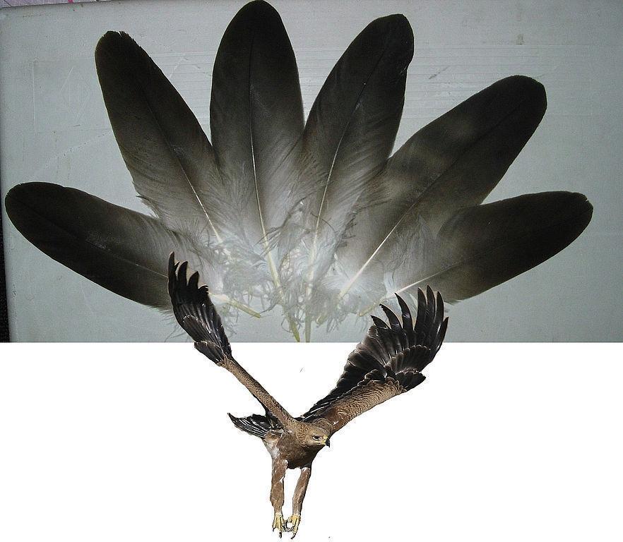 Декоративные перья купить, перья страуса, фазана