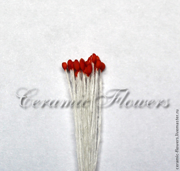 Stamens with small red, Stamens, Rostov-on-Don,  Фото №1