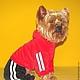 """Одежда для собак, ручной работы. Заказать Костюм спортивный""""Сердечко"""". Лиля Одежда для собак. Ярмарка Мастеров. Одежда для собак, той-терьер"""