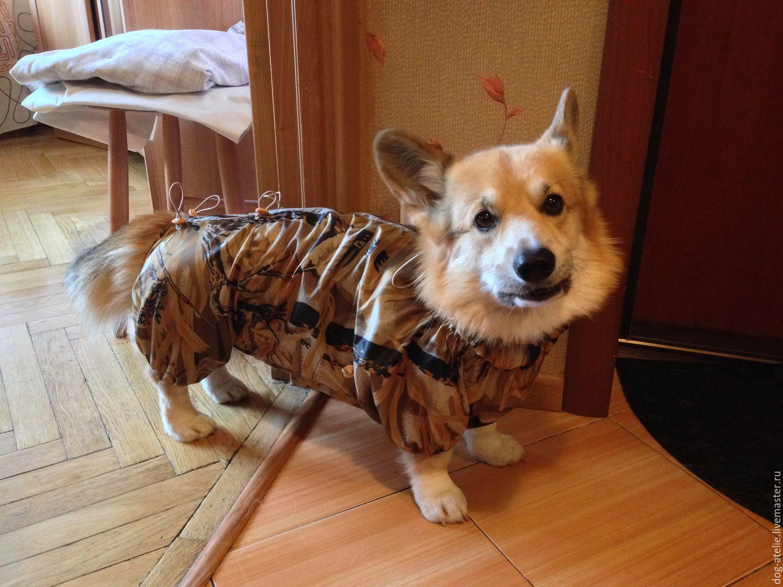 Москва ателье одежда для собак