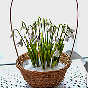 Цветы и флористика handmade. Livemaster - original item basket of snowdrops