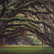 """Картины и панно ручной работы. Ярмарка Мастеров - ручная работа """"Зеленый лес"""" панно, печать на холсте 70х50. Handmade."""