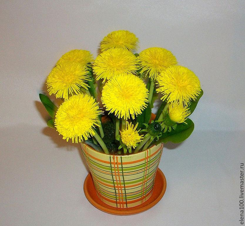 Одуванчики, Цветы, Озерск,  Фото №1