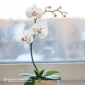 Цветы и флористика ручной работы. Ярмарка Мастеров - ручная работа Орхидея Фаленопсис в горшочке. Handmade.