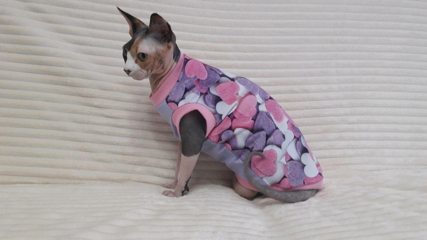 """Одежда для кошек  Майка """"Сахарное сердце"""", Одежда для питомцев, Бийск,  Фото №1"""
