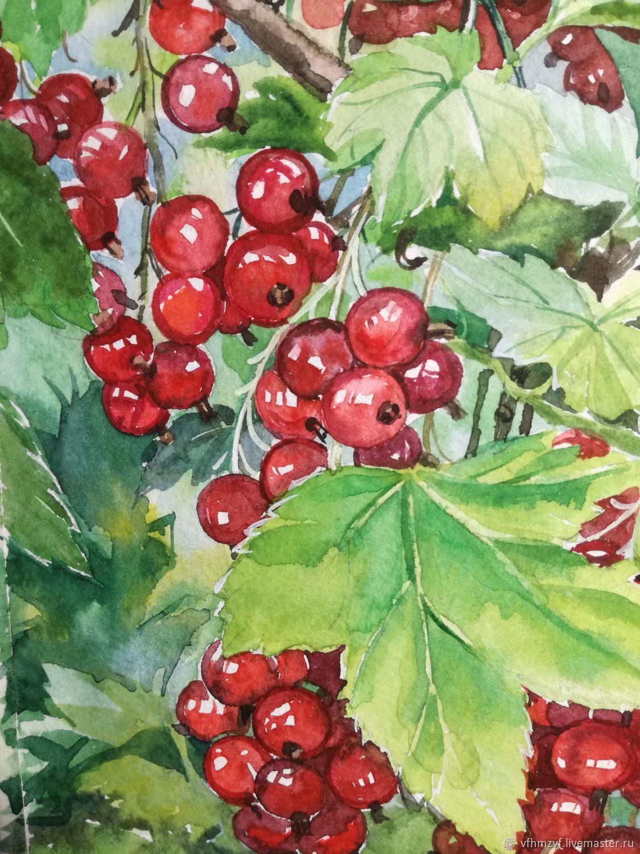 красная смородина рисунок карандашом эхинококк