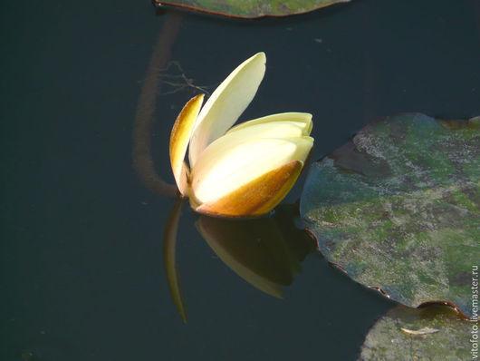 Фотокартины ручной работы. Ярмарка Мастеров - ручная работа. Купить Фотокартина Водяная лилия. Handmade. Разноцветный, фотокартина, цветы