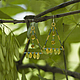 """Серьги ручной работы. Ярмарка Мастеров - ручная работа. Купить Серьги """"Геометрия природы"""". Handmade. Желто-зеленые серьги"""