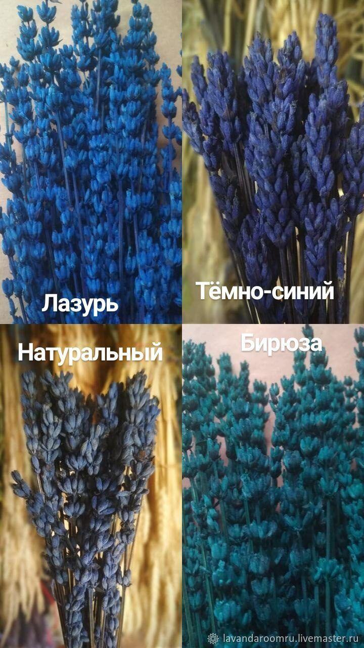 Стабилизированный лавандин 4 цвета, Букеты, Мытищи,  Фото №1