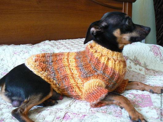 """Одежда для собак, ручной работы. Ярмарка Мастеров - ручная работа. Купить Вязаный свитер для собаки """"Золотая осень"""". Handmade. Свитер"""
