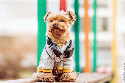 Одежда для собак, ручной работы. Ярмарка Мастеров - ручная работа. Купить Байка для собаки. Handmade. Серый, купить одежду для собаки