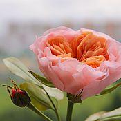Цветы и флористика ручной работы. Ярмарка Мастеров - ручная работа Мастер-класс  Пионовидная роза. Handmade.