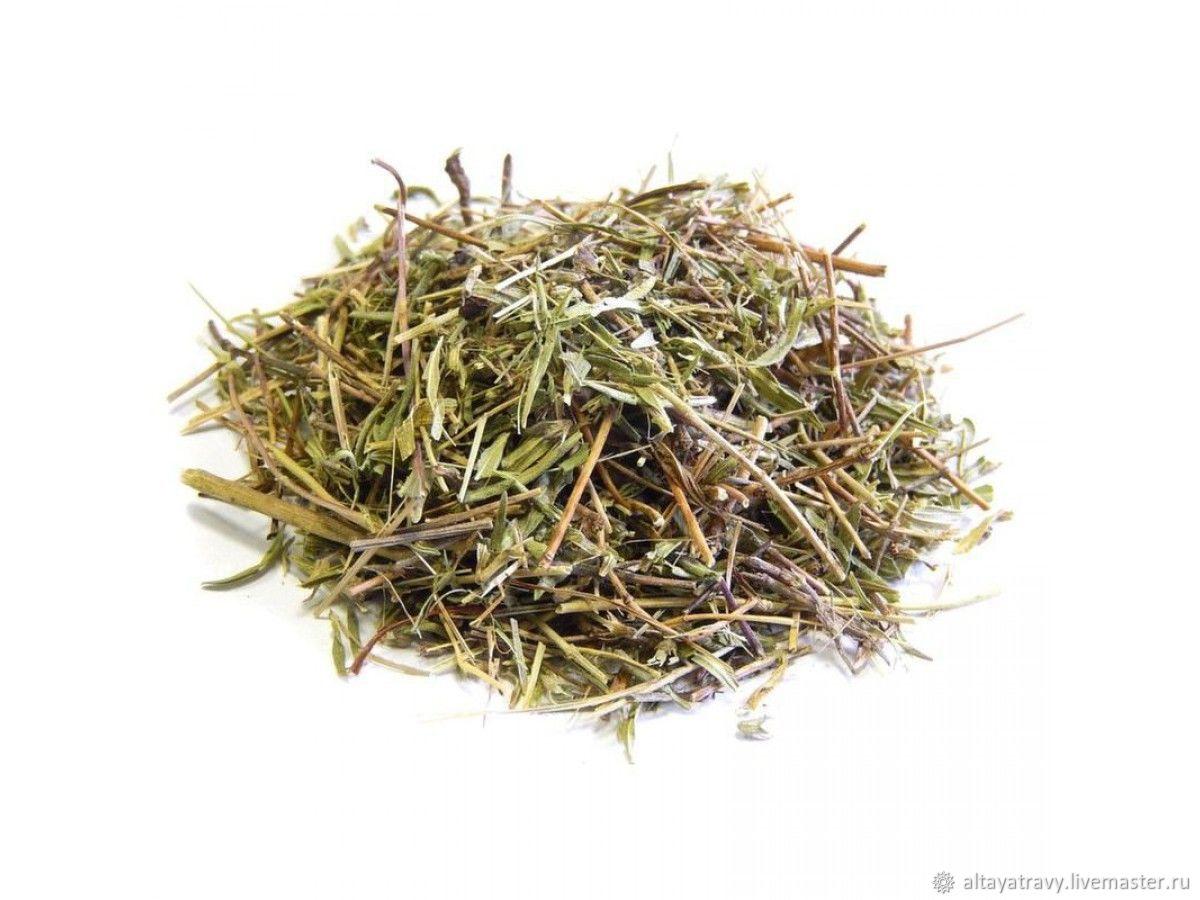 thyme, Grass, Kemerovo,  Фото №1