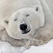 """Открытки ручной работы. Ярмарка Мастеров - ручная работа Почтовые открытки """"Белый медведь"""". Handmade."""