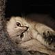 Фотокартины ручной работы. Кот.Домашний питомец.Пушистый любимец.Фотокартина авторская.. Яна Мой фотомагазин.. Интернет-магазин Ярмарка Мастеров.