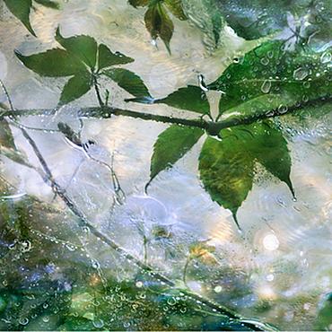 Картины и панно ручной работы. Ярмарка Мастеров - ручная работа Фотокартина природа, зеленые листья под дождем «Летний дождь». Handmade.