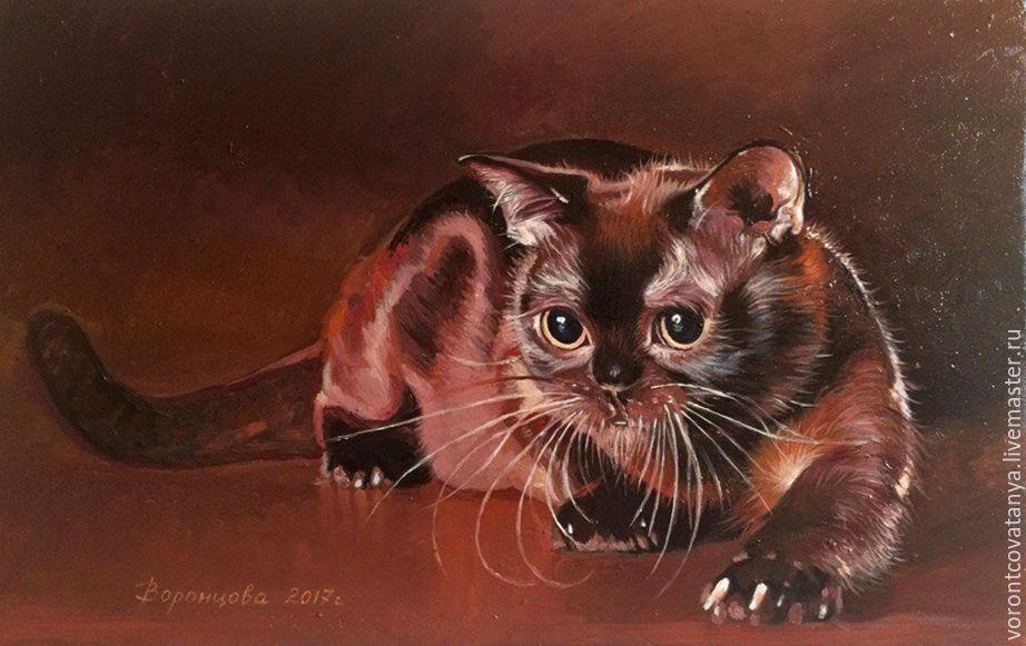 шоколадный котёнок фото