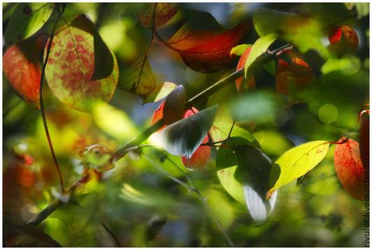 Фотокартина природы для интерьера -  листья из серии «Акварели Солнца». Dark Red. Ануфриева Елена.