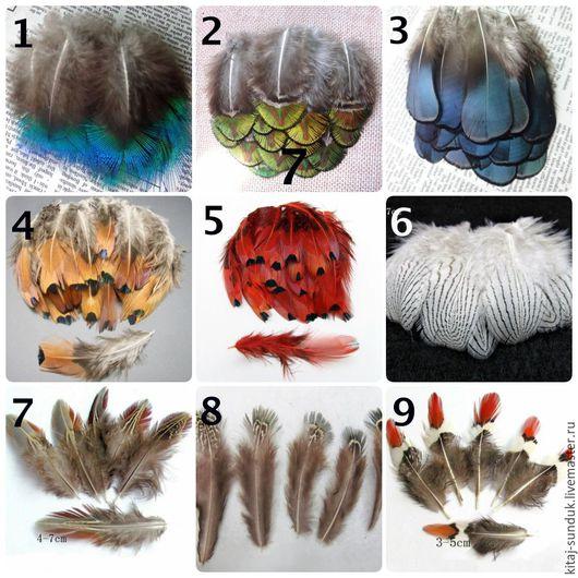 Другие виды рукоделия ручной работы. Ярмарка Мастеров - ручная работа. Купить Перья фазана и павлина в ассортименте. Handmade.