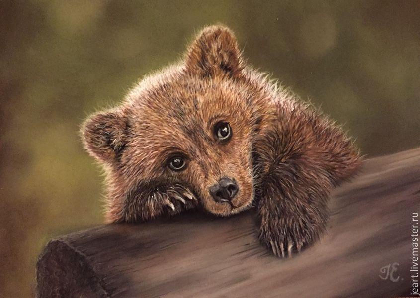 Картинки прикольные с медведями