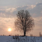 Картины и панно handmade. Livemaster - original item Birch greet the dawn.Photo pictures.Without photoshop.. Handmade.