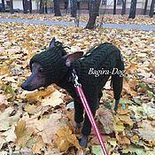 Для домашних животных, ручной работы. Ярмарка Мастеров - ручная работа Комплект для Ксоло и Перуанских голых собак зимний. Handmade.