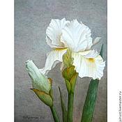 Картины и панно ручной работы. Ярмарка Мастеров - ручная работа Постер картины акварелью Белый Ирис, серый белый ирисы. Handmade.