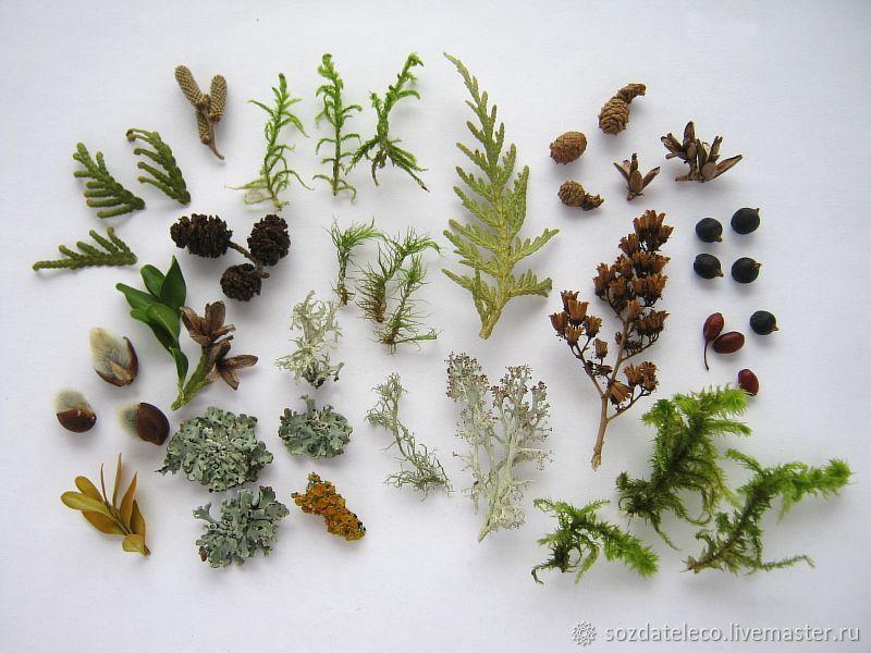 Набор сухоцветов лесной для эпоксидной смолы и флористики – купить на Ярмарке Мастеров – IU9DDRU | Сухоцветы, Ветлуга