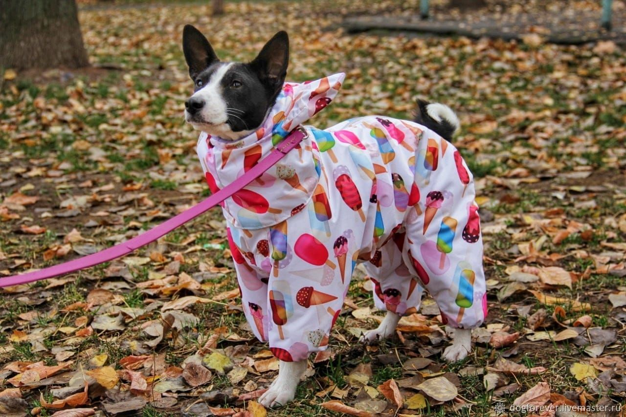 Одежда для собак. Басенджи, Одежда для питомцев, Гуково,  Фото №1