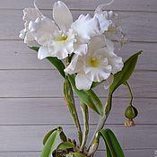 Цветы и флористика ручной работы. Ярмарка Мастеров - ручная работа Орхидея из полимерной глины Каттлея. Handmade.
