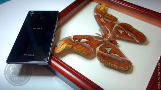 Фитодизайн помещений ручной работы. Ярмарка Мастеров - ручная работа. Купить Самая большая бабочка в мире - Павлиноглазка Атлас. Handmade.
