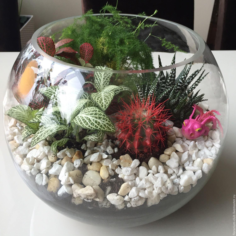 Комнатные цветы в аквариуме купить купить розы по 10 рублей
