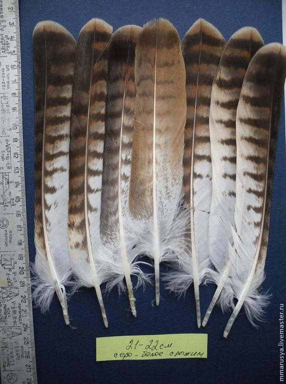 Ответы Mail Ru: Где купить перья совы и орла на ловушку