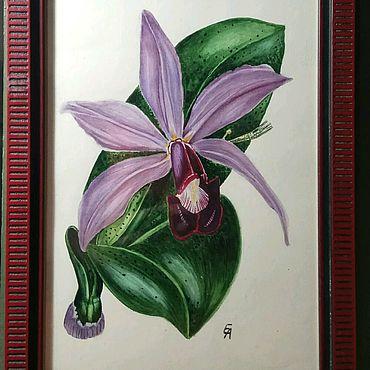 Картины и панно ручной работы. Ярмарка Мастеров - ручная работа Орхидея картина акварель. Handmade.