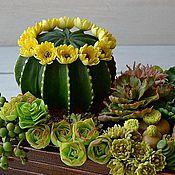 Цветы и флористика ручной работы. Ярмарка Мастеров - ручная работа садик из суккулентов,холодный фарфор. Handmade.