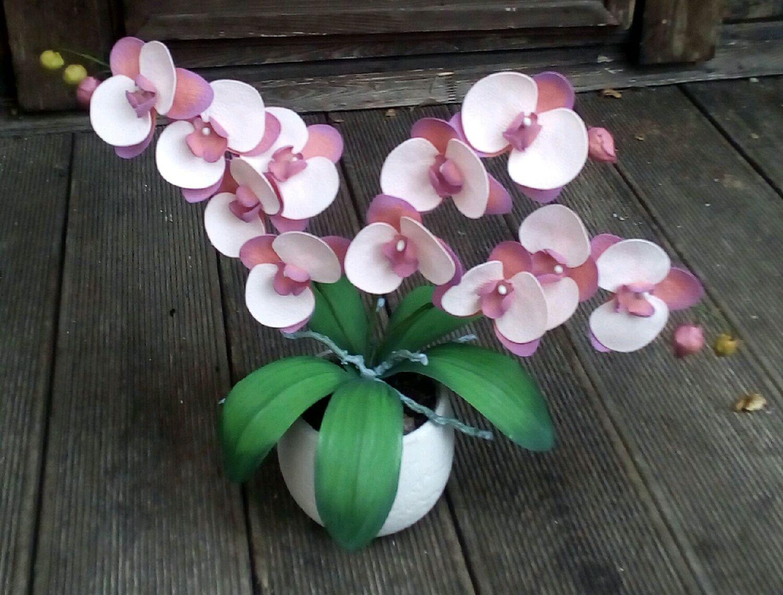 Цена за штуку орхидеи
