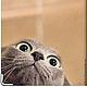 """Обложки ручной работы. обложка """"Кто здесь?!"""". Анастасия (sollisy). Ярмарка Мастеров. Коты, кожаная обложка, серые"""