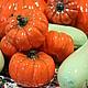 Композиция из керамических миниатюр в виде овощей - тыквы, мини тыквы, кабачки. Стильное украшение уютного дома, необычный подарок по любому поводу. Мини тыквы - 600 рублей за штуку, большие 3 000 руб