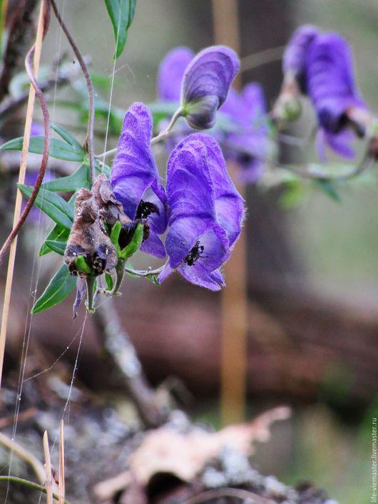 """Фотокартины ручной работы. Ярмарка Мастеров - ручная работа. Купить Фоторабота"""" Лесной аконит"""". Handmade. Тёмно-синий, цветы"""