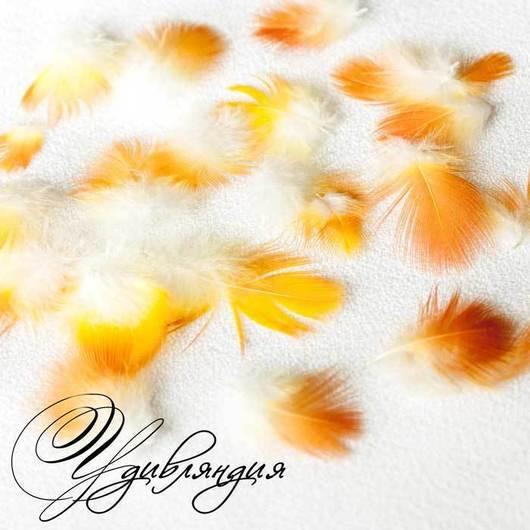 Другие виды рукоделия ручной работы. Ярмарка Мастеров - ручная работа. Купить Маленькое перо попугая натуральное, не окрашенное №107.. Handmade.