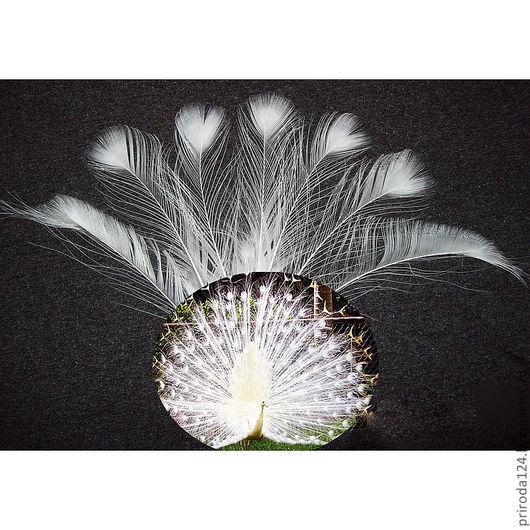"""Другие виды рукоделия ручной работы. Ярмарка Мастеров - ручная работа. Купить Перья птицы """"Павлин """" (белый). Handmade."""