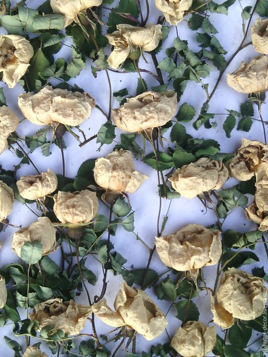 Материалы для флористики ручной работы. Ярмарка Мастеров - ручная работа. Купить Розы кремовые (цветы шиповника сушеные). Handmade. Розовый