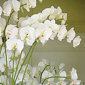 Цветы и флористика ручной работы. Ярмарка Мастеров - ручная работа Орхидеи фаленопсис из полимерной глины. Handmade.