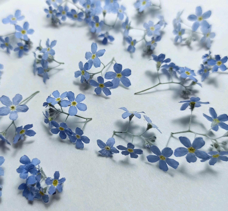 Сухоцветы: незабудки (-15% от 3х наборов), Сухоцветы для творчества, Петергоф,  Фото №1