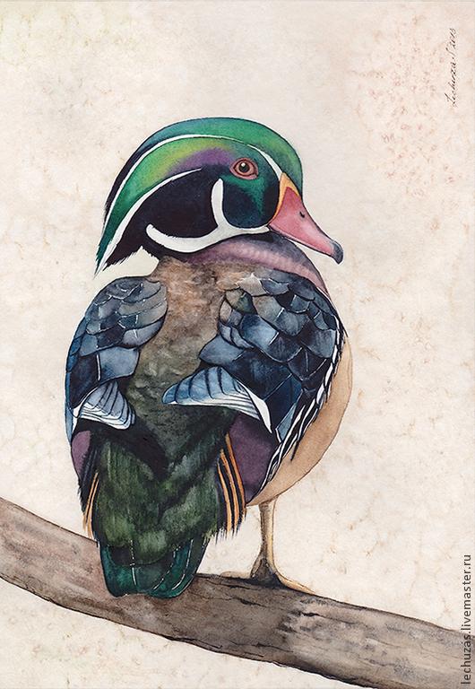 Каролинская утка