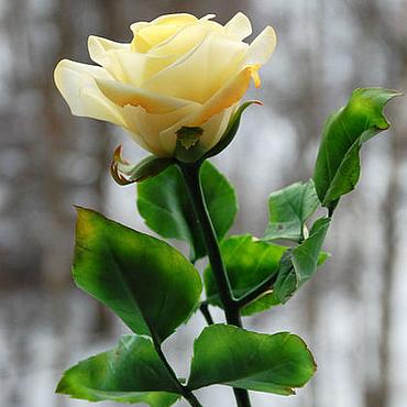 Цветы и флористика ручной работы. Ярмарка Мастеров - ручная работа Желтая роза из полимерной глины. Handmade.