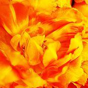 Картины и панно ручной работы. Ярмарка Мастеров - ручная работа Тюльпаны - море огня. Фотокартина. Handmade.